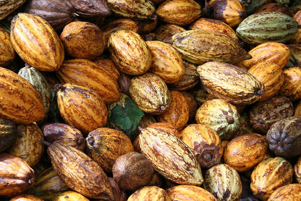 kakaofrukter