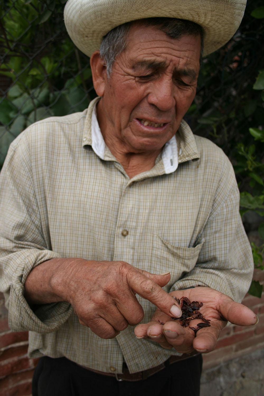 man visar kakaobönor